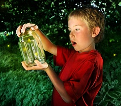 Backyard Science: Summer's Shining Stars