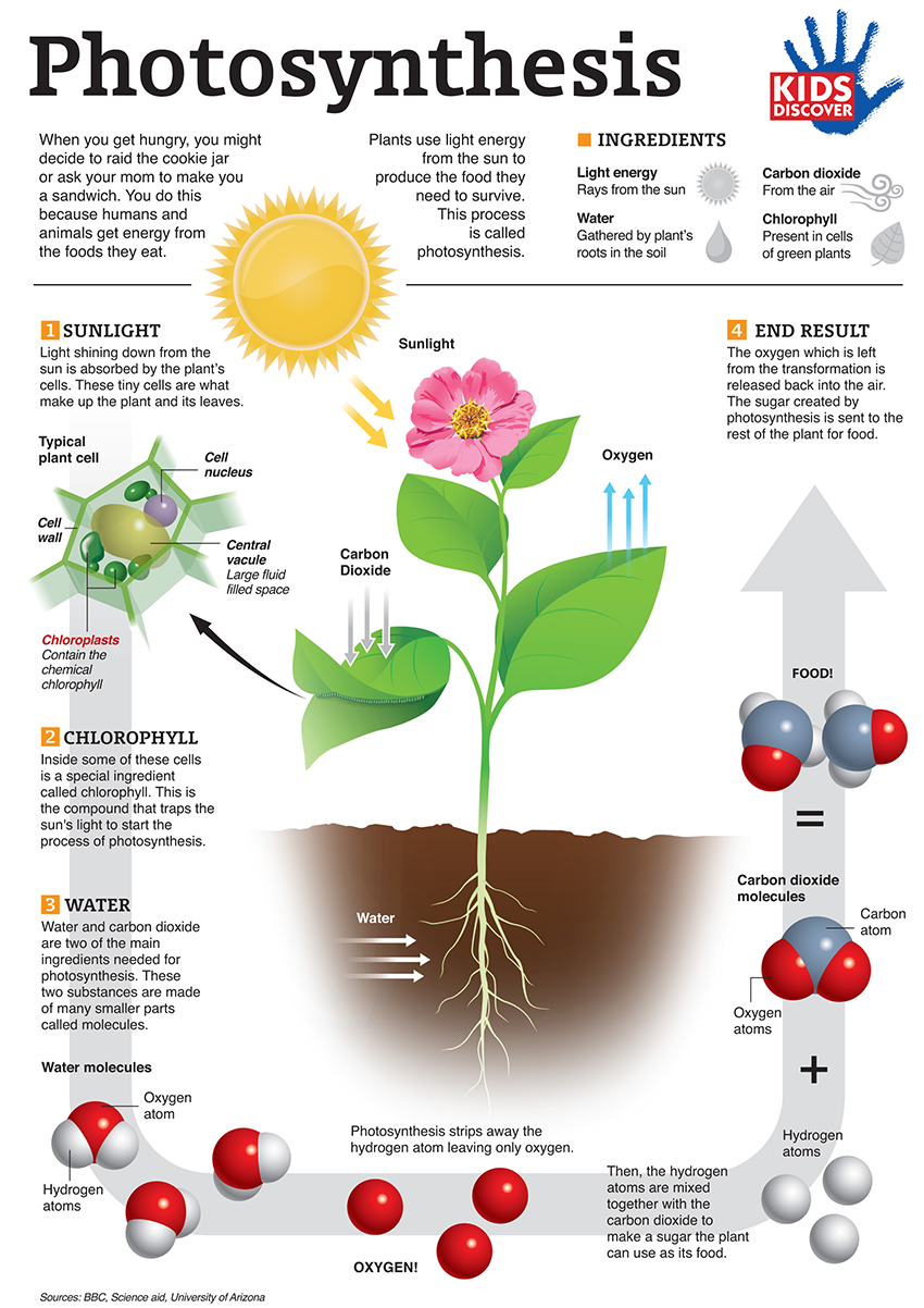 3 energy states of photosynthesis