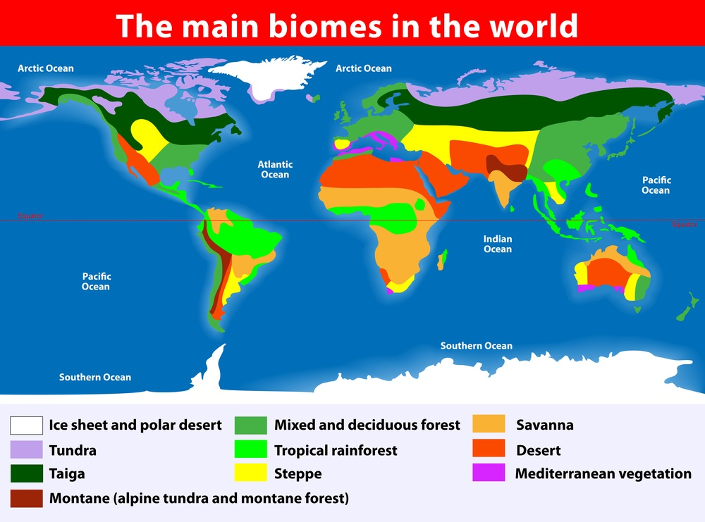 Biomes Of The World Map 8 Biomes   CGC Old 2016