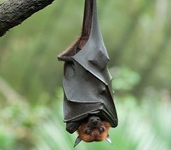 Nature's Spooks, Part 2: Bats