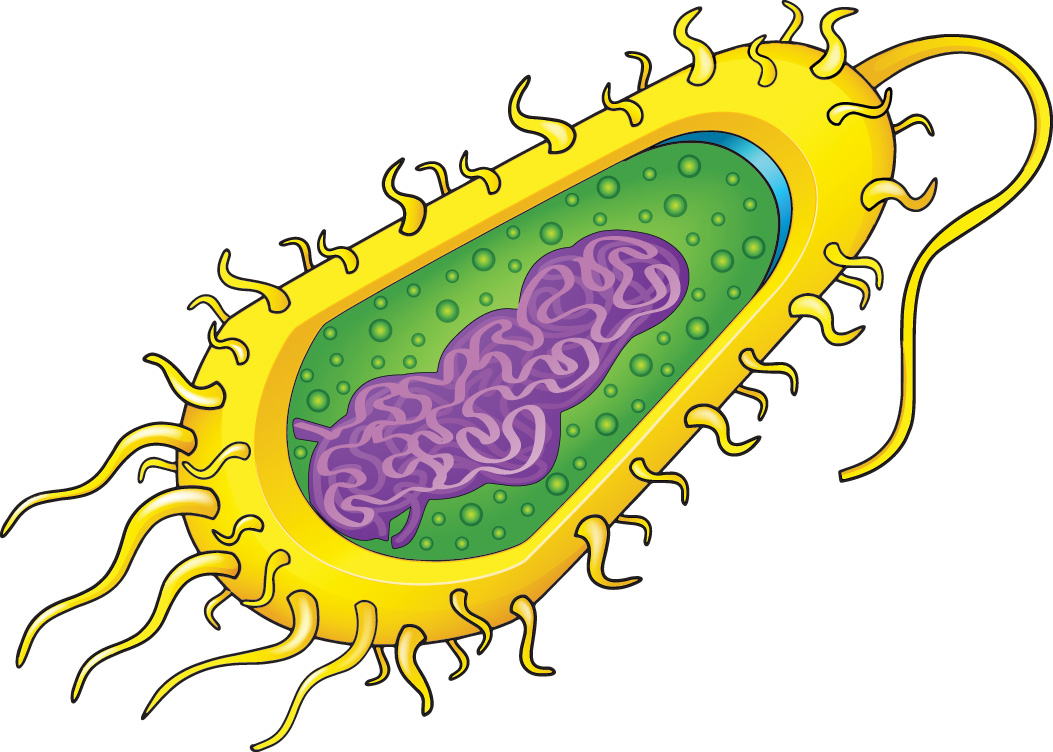 Prokaryotic cells  like the  Labeled Prokaryotic Cell